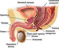 prostata-kiev-doctor